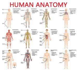 Scope Of Anatomy In Pakistan