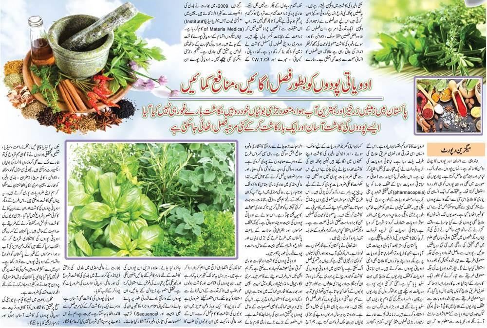 Grow Medicinal Plants & Earn Money (Urdu, English Guide)
