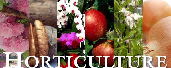 Scope Of Horticulture In Pakistan