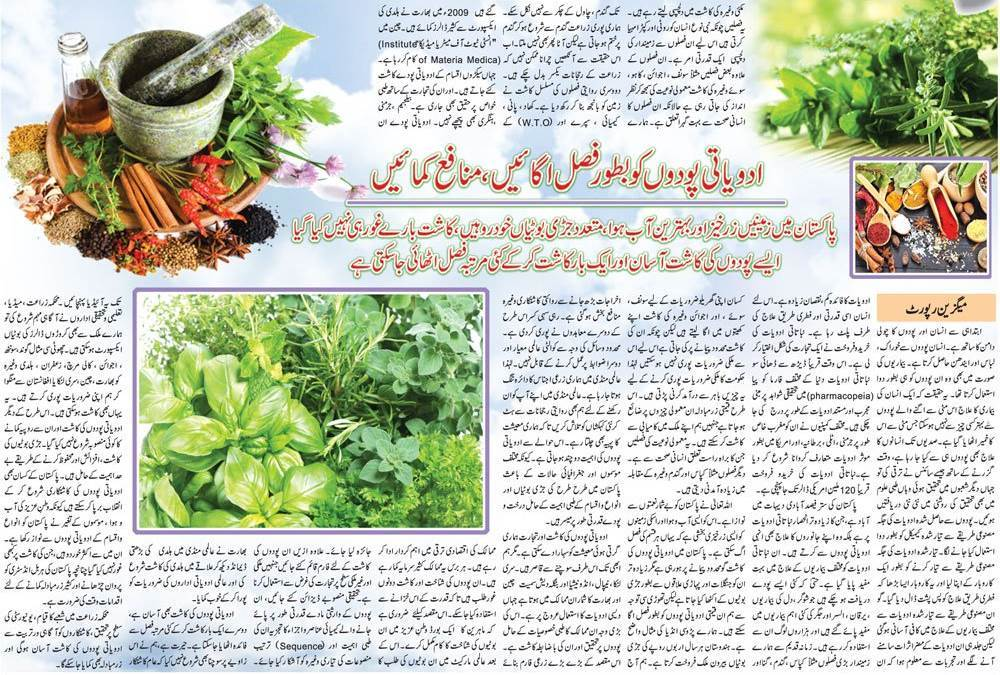 Grow Medicinal Plants & Earn Money (Urdu, English Guide)