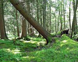 Scope of Forestry in Pakistan, Intro, Career, Job Prospects, Duties, Skills Required